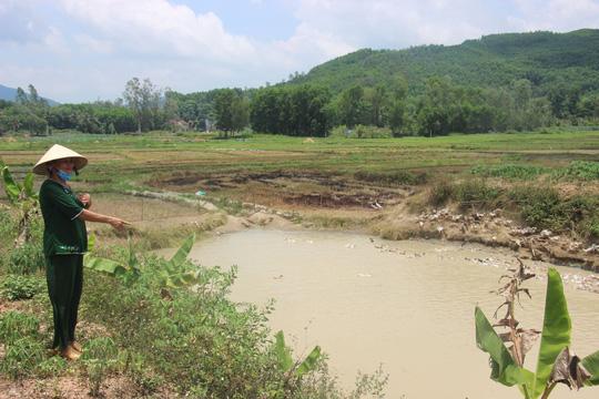Vịt mót lúa trên đồng ở Bình Định cũng phải trả phí