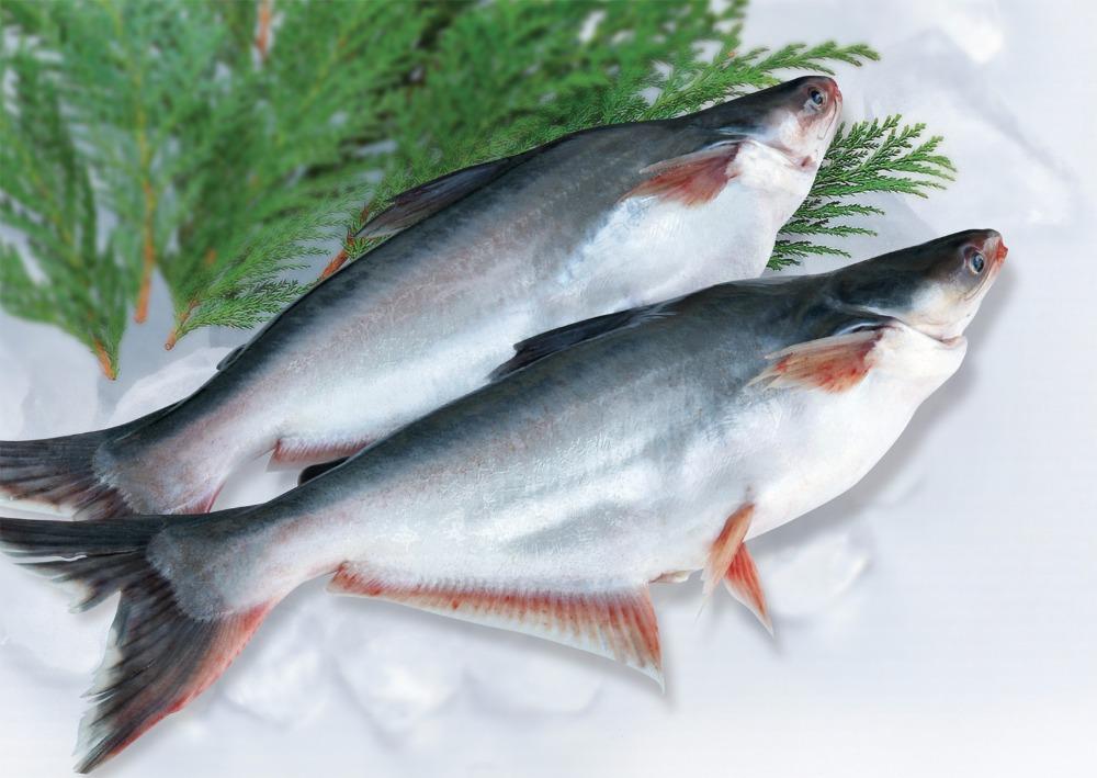 Tây Ban Nha cảnh báo ăn cá tra Việt Nam có nguy cơ nhiễm độc kim loại và thuỷ ngân