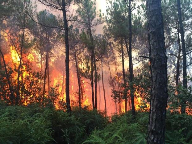Rừng thông Đan Viện Thiên An liên tục xảy ra cháy
