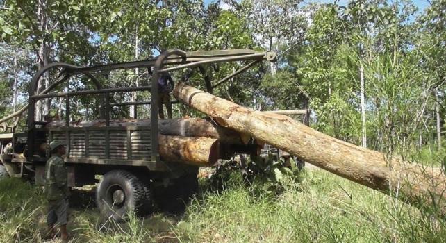 Giới chức và quân đội CSVN đồng lõa phá rừng Cambodia