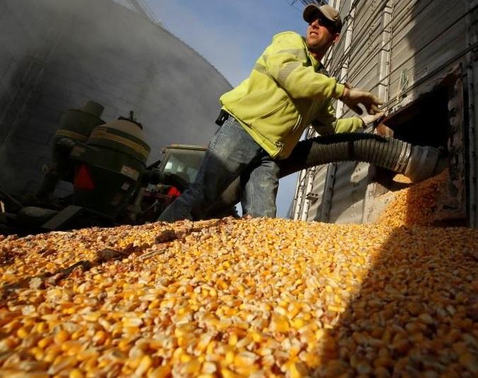 Chính Mexico cũng sẽ thiệt hại nếu đánh thuế lên bắp và đậu nành Hoa Kỳ