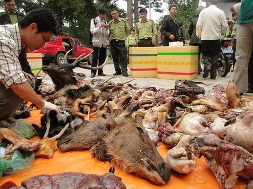 Hoạt động buôn bán động vật hoang dã ở Việt Nam vẫn diễn ra trên mạng xã hội