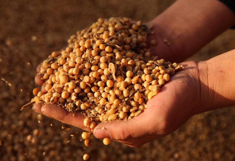 Trung Cộng dự kiến hủy bỏ đơn đặt hàng 1.1 triệu tấn đậu nành Hoa Kỳ