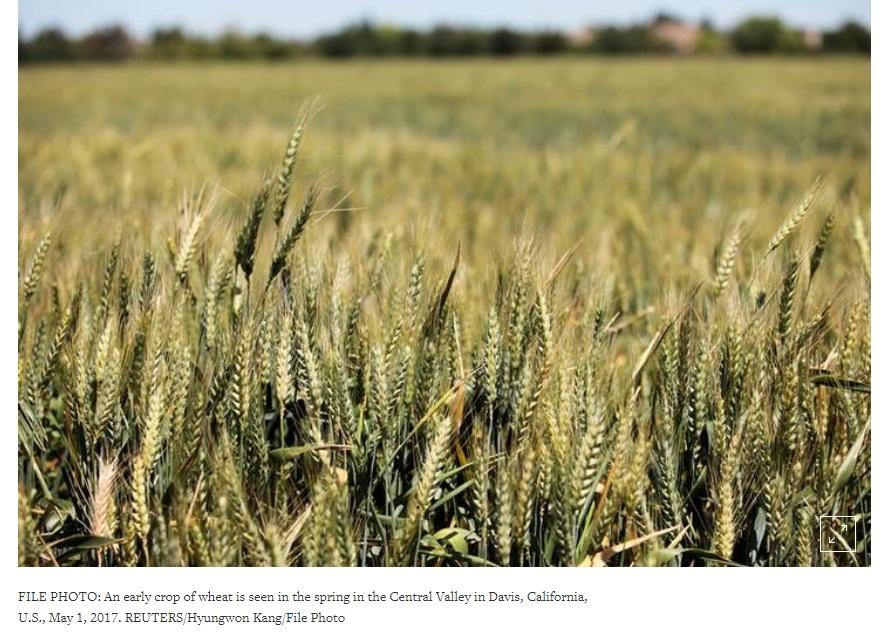 Tranh chấp thương mại với Mexico khiến Hoa Kỳ mất vị trí đứng đầu cung cấp lúa mì toàn cầu