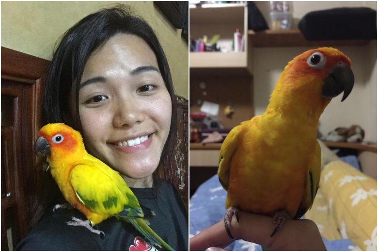 Phụ nữ Việt ngồi tù ở Singapore vì đập chết con két của con chồng