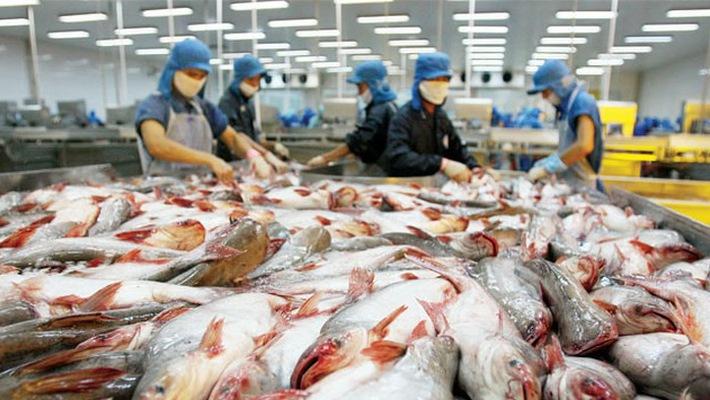 Hoa Kỳ trở thành thị trường nhập cảng cá ba sa Việt Nam lớn nhất