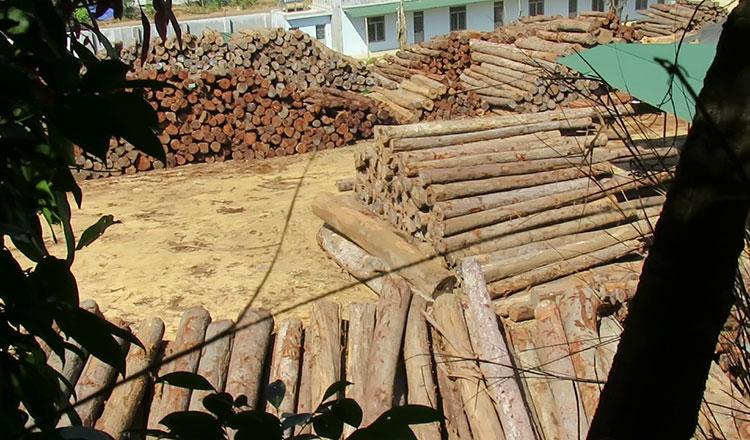 Liên Âu trấn an các tổ chức phi chính phủ về thỏa thuận mua gỗ với Việt Nam