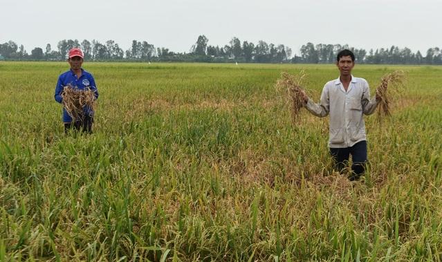Chính quyền lấp kênh huyết mạch- hàng trăm hecta lúa chết khát