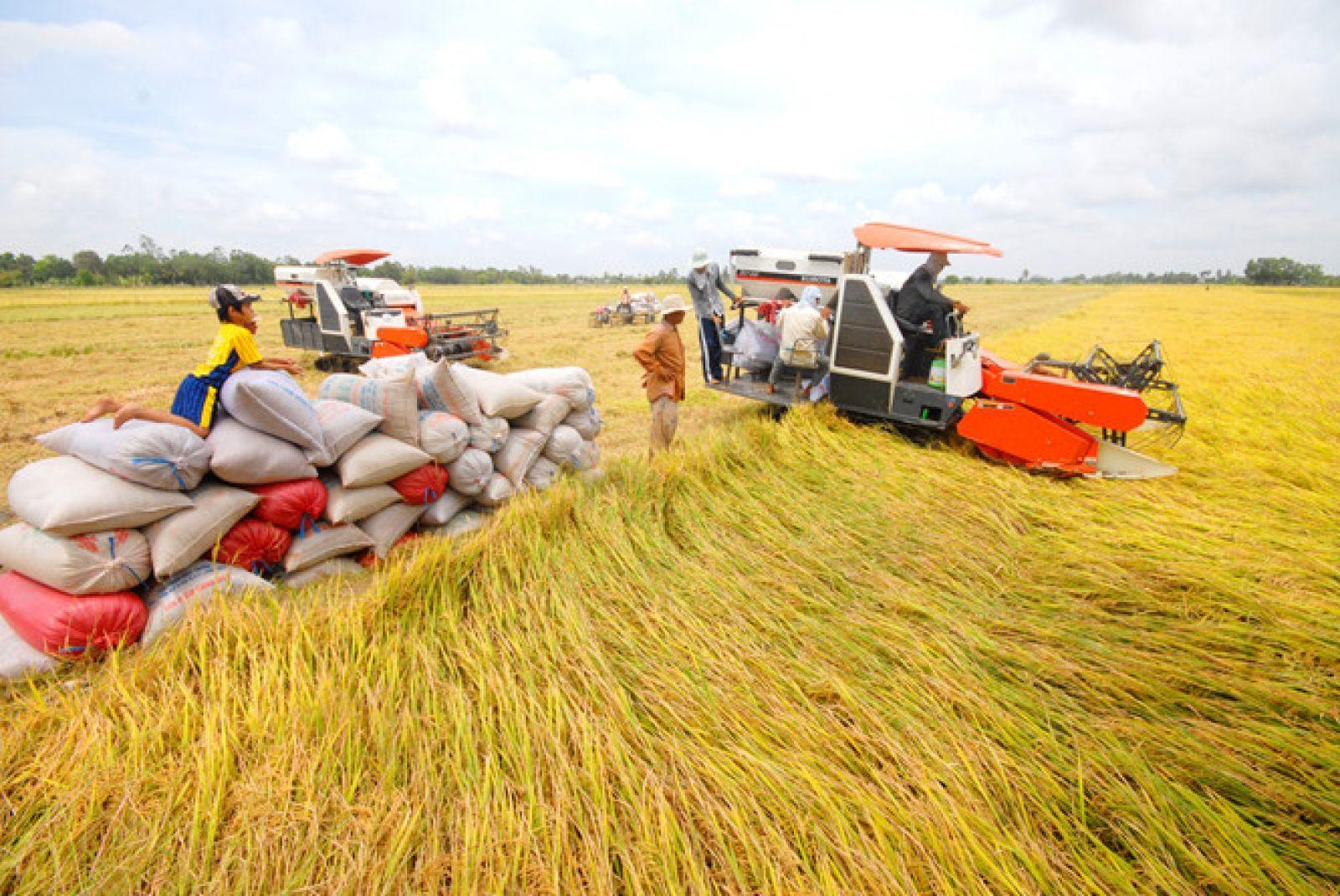 Hàng loạt nông sản chủ lực của Việt Nam giảm giá mạnh, đầu ra bế tắc