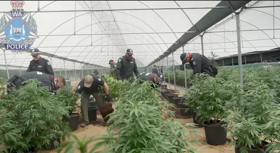 Cảnh sát Tây Úc tăng cường đột kích nhà trồng cần sa của băng đảng Việt Nam