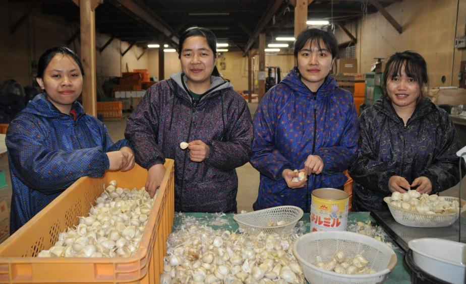 Ngành sản xuất nông nghiệp Aomori ở Nhật là niềm hy vọng của sinh viên thực tập Việt Nam