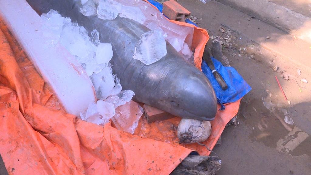 Ngư dân đòi 100 triệu đồng mới giao xác cá sắp tuyệt chủng cho trung tâm bảo tồn