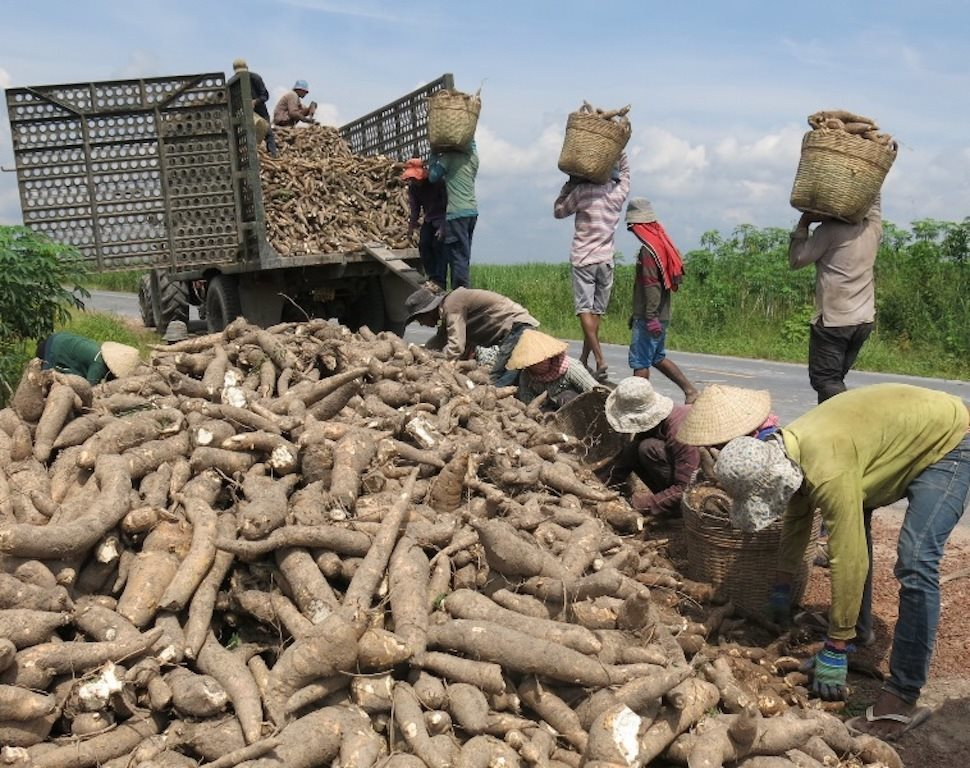 """Thế mạnh nông sản Việt Nam lao đao vì chính sách mới của """"bạn vàng bốn tốt"""""""