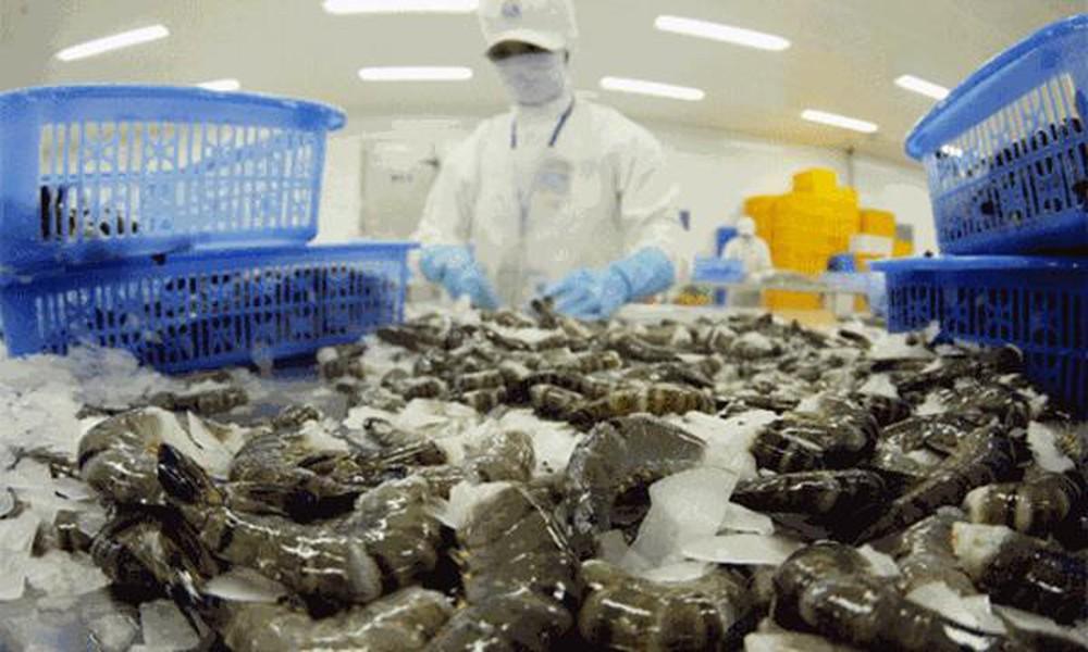 Công ty Việt Nam bị tố lấy tôm Ấn Độ gắn mác Việt xuất sang Mỹ