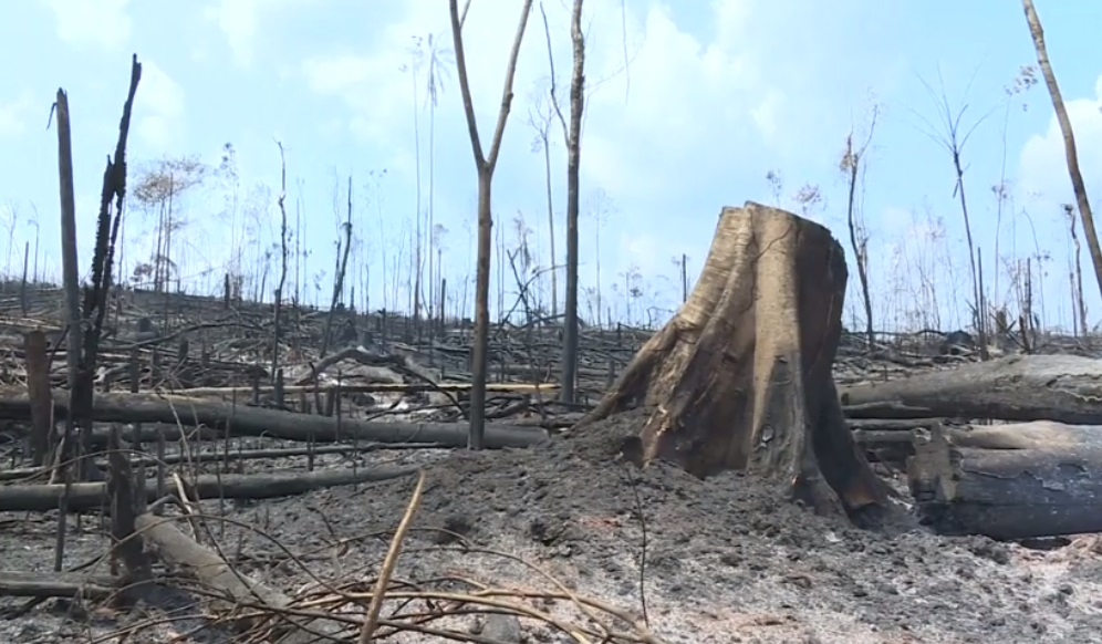 Quân đội Brazil dùng máy bay để chữa cháy ở Amazon