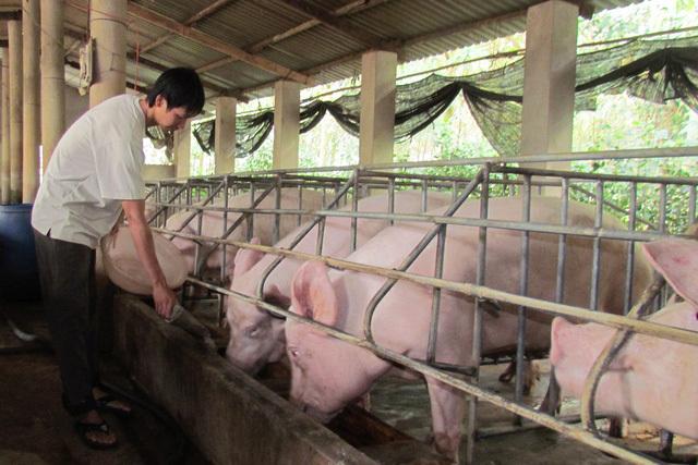 Hủy mua thịt heo của Mỹ, Trung Cộng gom thịt heo trong mùa dịch ở Việt Nam