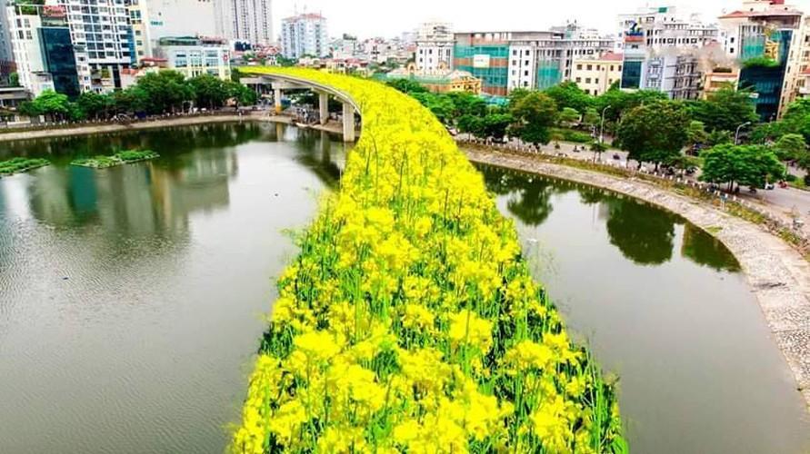 Dân đề nghị trồng hoa trên tuyến hỏa xa Cát Linh- Hà Đông để đỡ lãng phí 1 tỷ mỹ kim