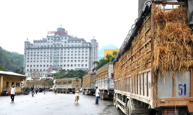 Hàng trăm xe container chở hoa quả của doanh nghiệp Việt bị cấm vào Trung Cộng