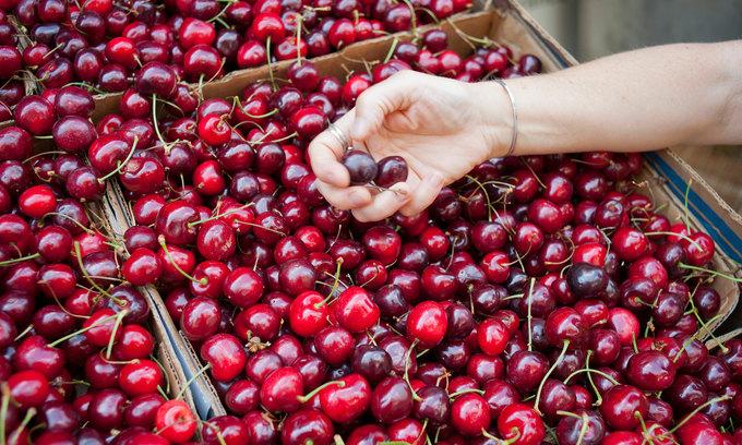 Chiến tranh thương mại khiến sản lượng trái cây nhập cảng từ Hoa Kỳ vào Việt Nam tăng mạnh