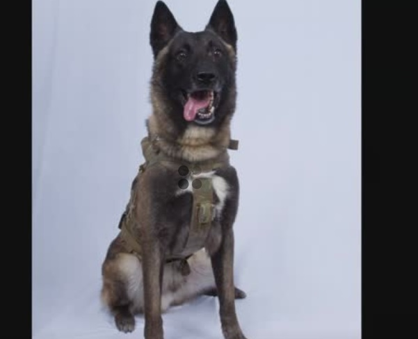 """Tổng Thống Donald Trump mời chú chó """"anh hùng"""" từ cuộc đột kích Al-Baghdadi đến tòa Bạch Ốc"""