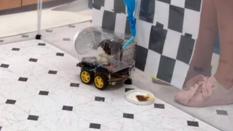 Nghiên cứu mới huấn luyện chuột lái xe tại đại học Richmond