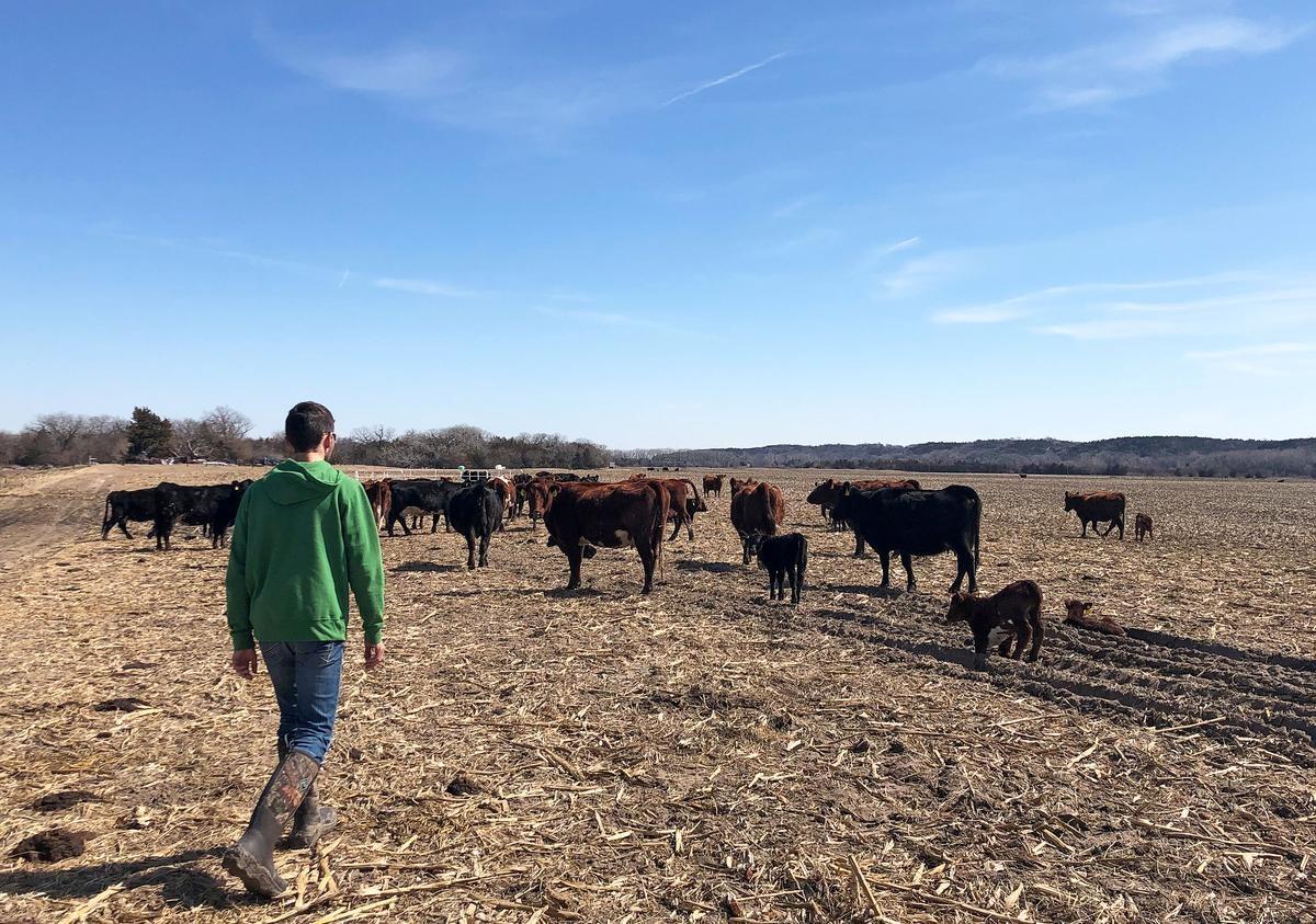 Hoa Kỳ sẽ bắt đầu đợt thanh toán tiền bao cấp thứ hai cho nông dân vào tuần tới