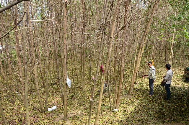 Cây chết hàng loạt gần dự án thép Hòa Phát Dung Quất ở Quãng Ngãi
