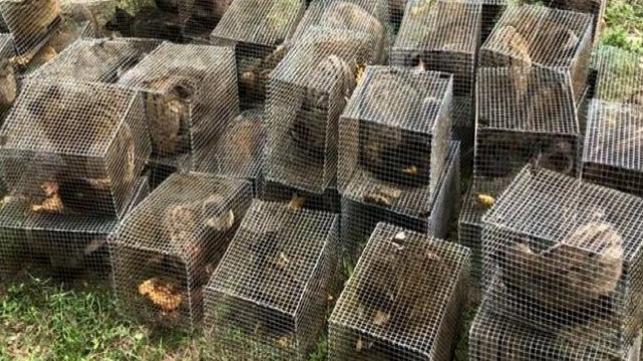 Malaysia trừng trị tội phạm săn bắt, buôn bán động vật hoang dã