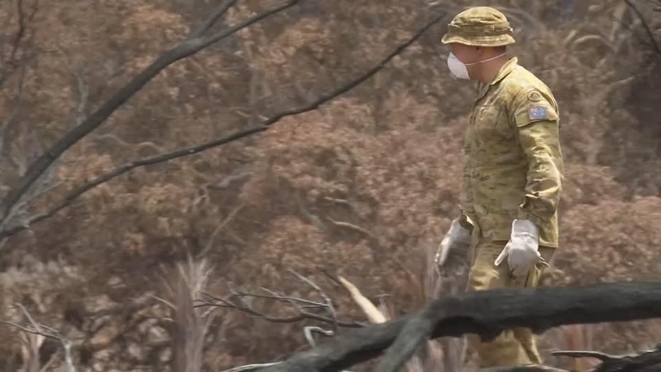 Úc gấp rút giải cứu động vật trên đảo Kangaroo