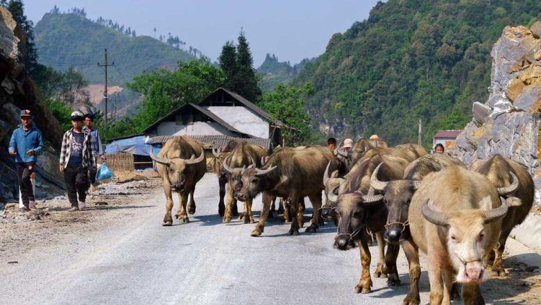 Hiệp định thương mại tự do EVFTA mang đến những cơ hội và thách thức mới cho nền nông nghiệp Việt Nam