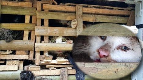 Người Việt tiêu thụ hơn1 triệu con mèo mỗi năm