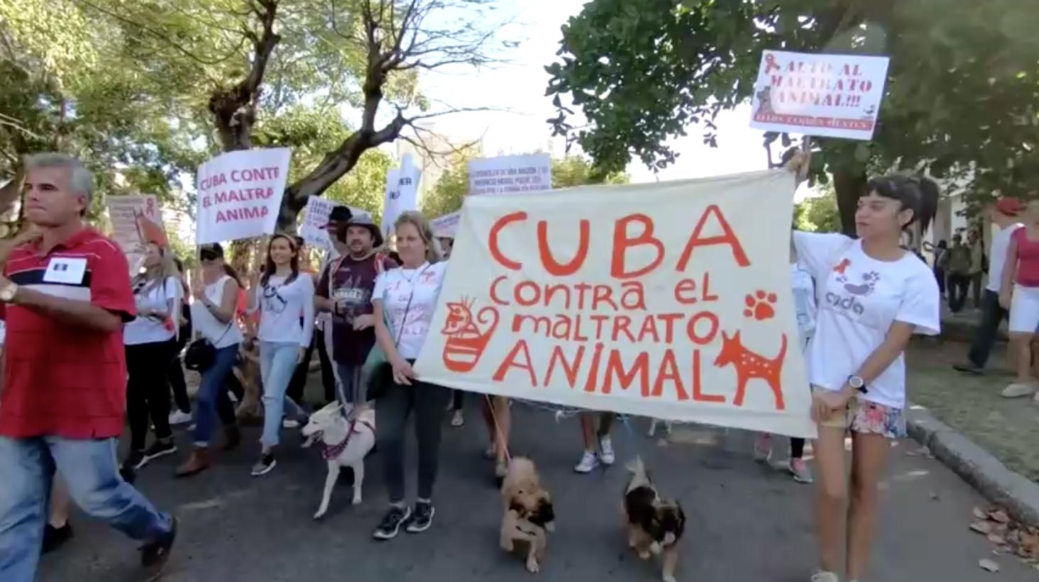 Cuba thông qua luật quyền lợi động vật