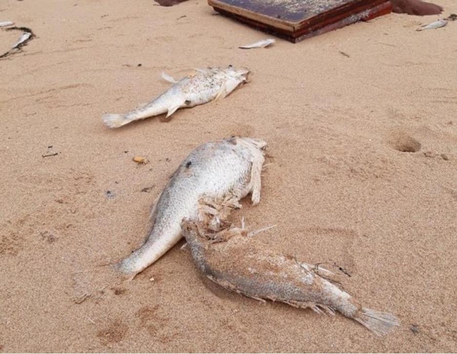 Cáchết dạt vào bờ biển ở Nghệ An trong nhiều ngày liên tiếp