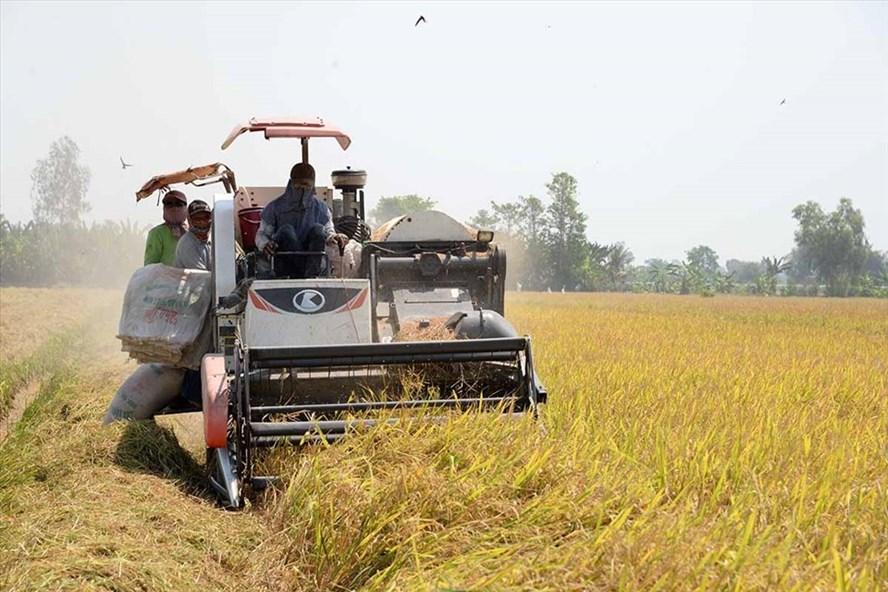 Việt Nam mua hơn 1.5 triệu tấn lúa của Cambodia trong bốn tháng đầu năm 2021